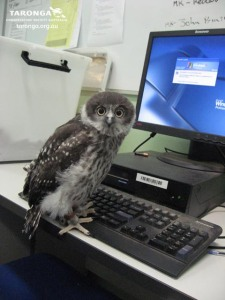 Owl Using Computer by RedPigeon via www.deviantart.com