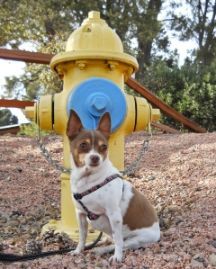 Phoebe and the Hydrant by Randy Cockrell