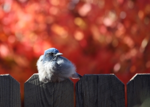 Bird, Fence, Fall Color