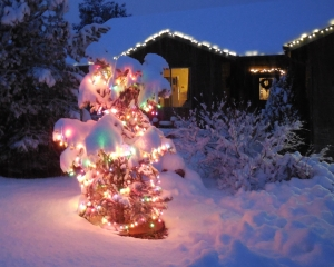 New Year, New Year's Eve, Snow, Lighted Tree