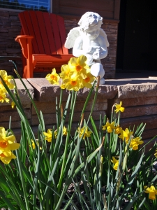 Daffodils, Connie Cockrell